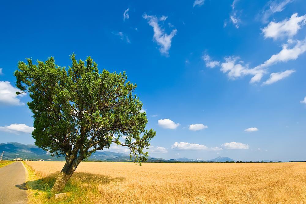 Plateau de Valensole_Allemagne-en-Provence (1)