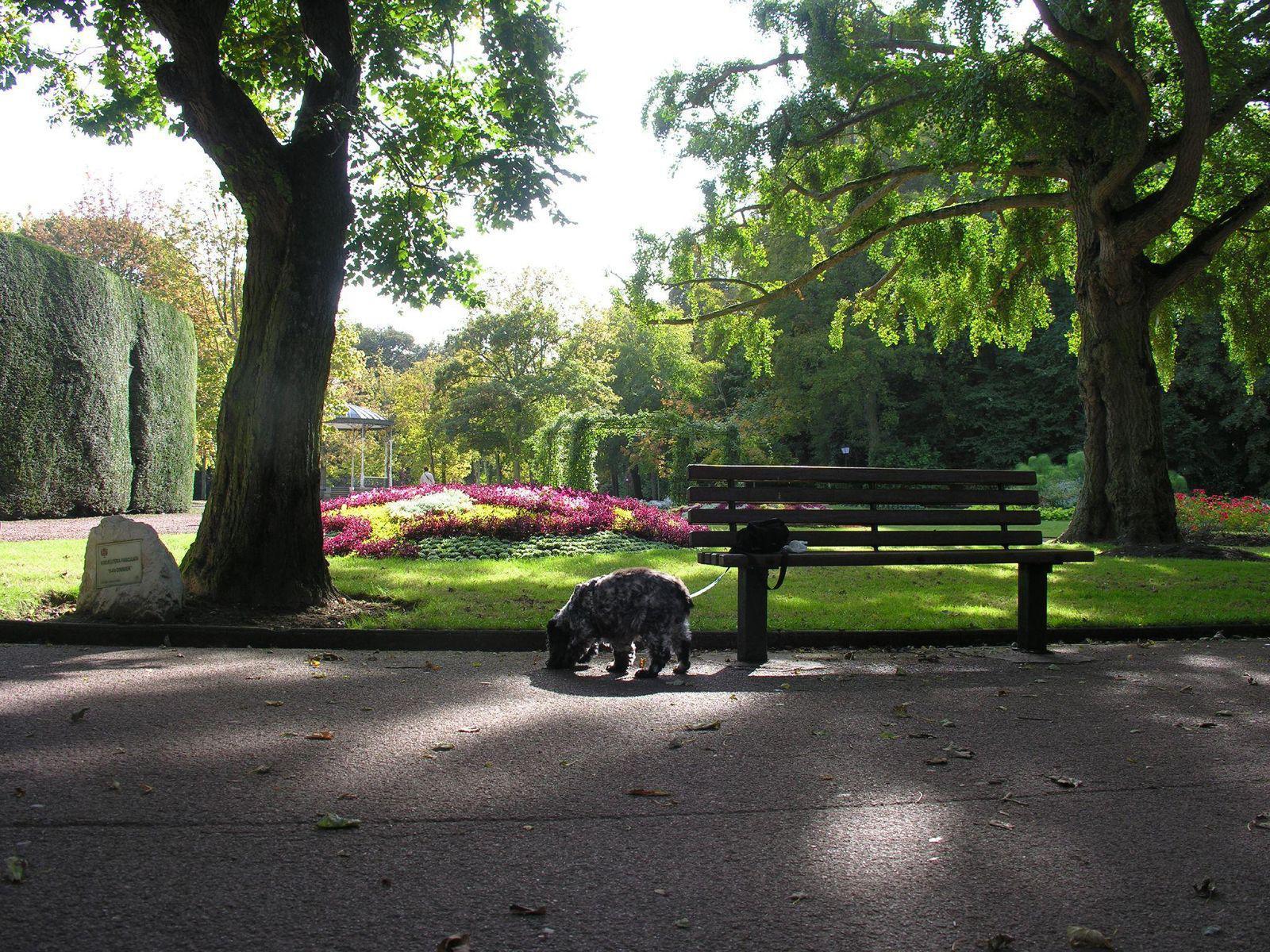 Jardin public de saint omer saint omer 62500 pas de for Jardin public