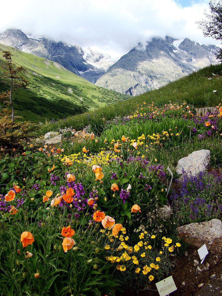 Jardin alpin de Lautaret_Villar-d'Arêne