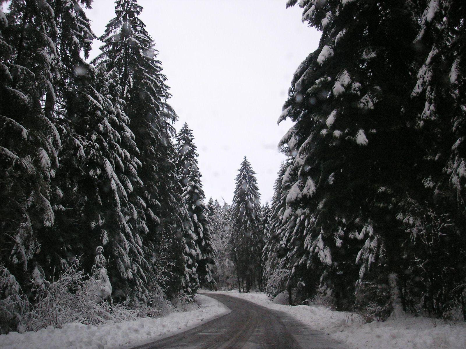 Forêt de la Joux_Champagnole