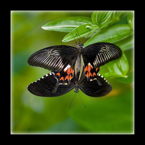Jardin des Découvertes et des papillons_Die
