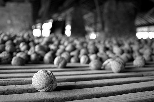 Séchoir à noix_Cognin-les-Gorges