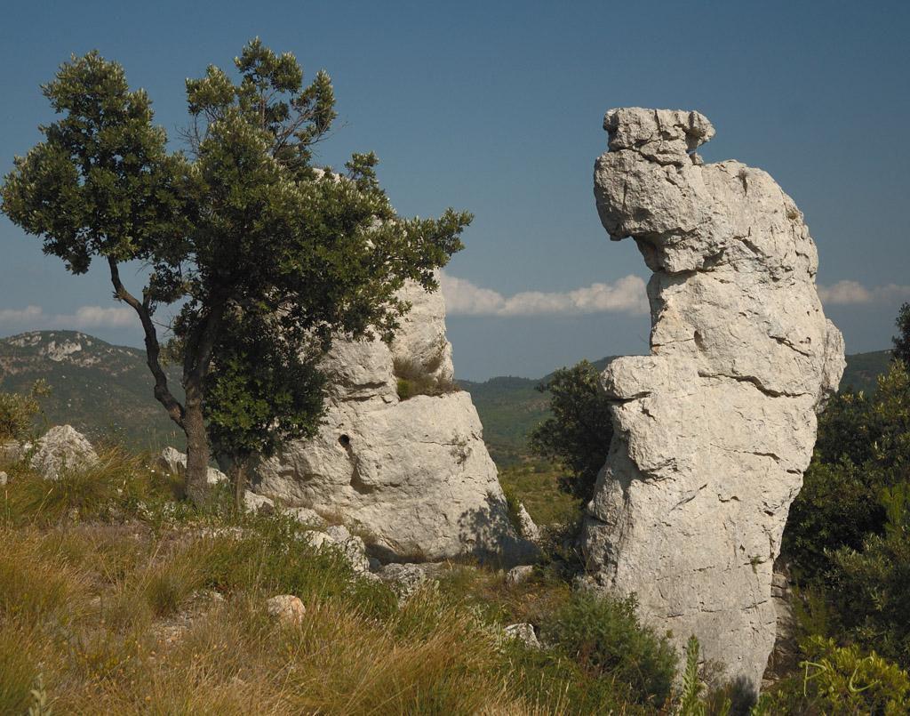 Montagne de la Loube_La Roquebrussanne
