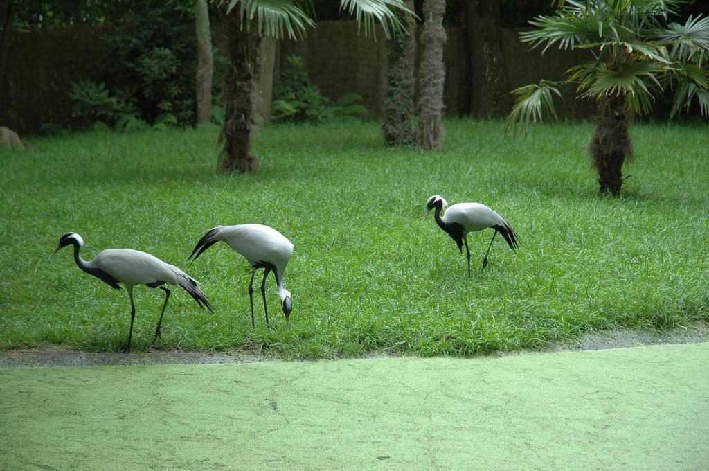 Parc zoologique d'Amnéville_Amnéville