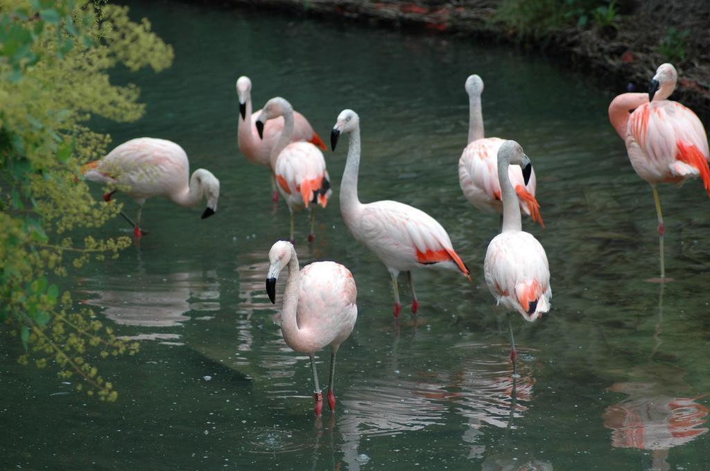 Parc zoologique d'Amnéville_Amnéville (1)