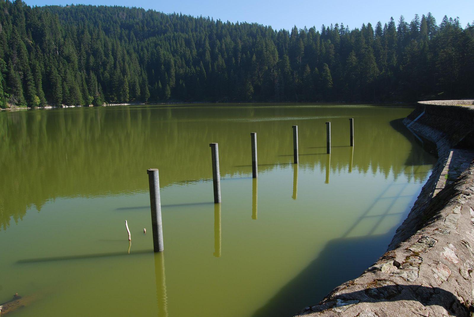 Lac Vert_Munster