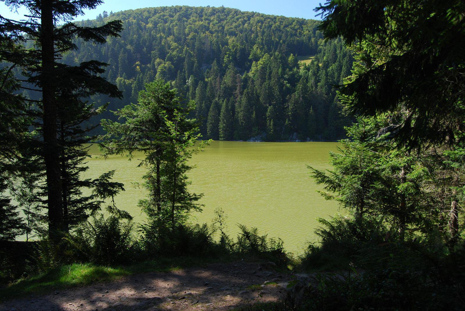 Lac Vert_Munster (1)