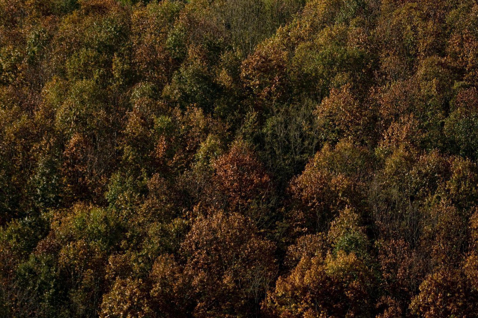 Forêt de Sare_Sare