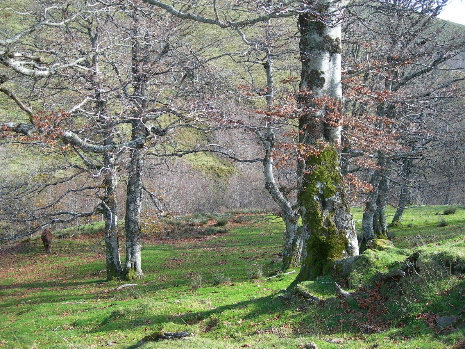 Forêt d'Iraty_Saint-Jean-Pied-de-Port (1)
