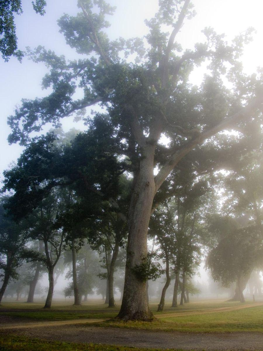Étang et Arborétum de Moré à Morcenx_Morcenx (1)