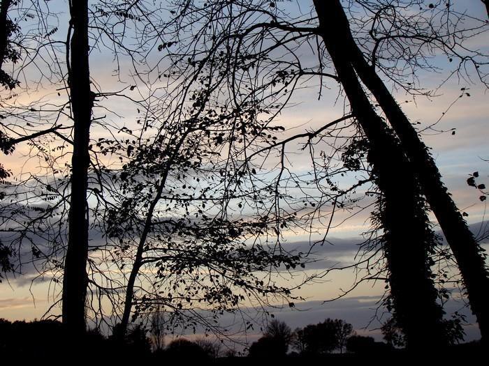 Forêt des Bertranges_La Charité-sur-Loire