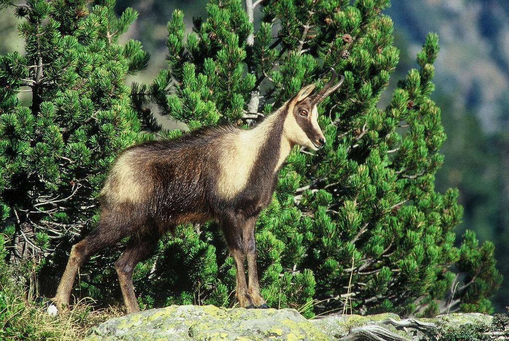 Parc national des Pyrénées_Laruns (3)