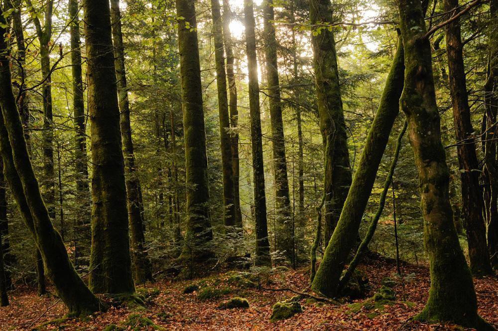 Forêt de BEFFOU_Loguivy-Plougras