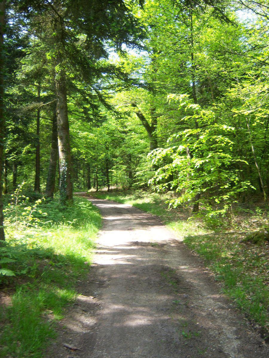 Image : Forêt d'Avaugour - Bois Meur