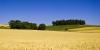 Culture du blé en Haute-Loire