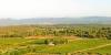 Vignes et oliviers dans la Plaine de la Crau