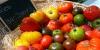 Tomates sur le marché de Carpentras