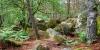 Grès de Fontainebleau