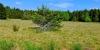 Dans le Parc naturell du Livradois-Forez
