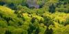 Forêt auvergnate