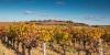 Vignoble de Fronton