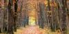 Couleurs d'automne en forêt de Bouconne