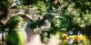 Canoë dans les gorges de la Sioule