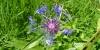 Fleur sur les Hautes-Chaumes