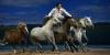 Equestria, festival équestre de Tarbes
