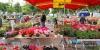 Marché aux fleurs de Tarbes