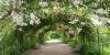 Roseraie, Jardin botanique de Marnay-sur-Seine
