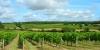 Balade dans les vignes à Trémont