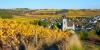 Les vigne à Saint-Aubin-de-Luigné