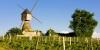 Moulin et vignes du côté de Montsoreau