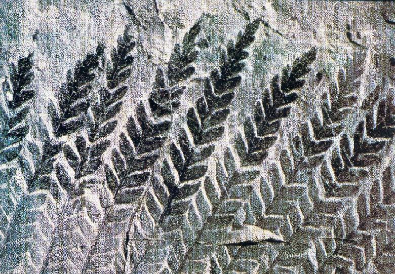 Fossile fougère