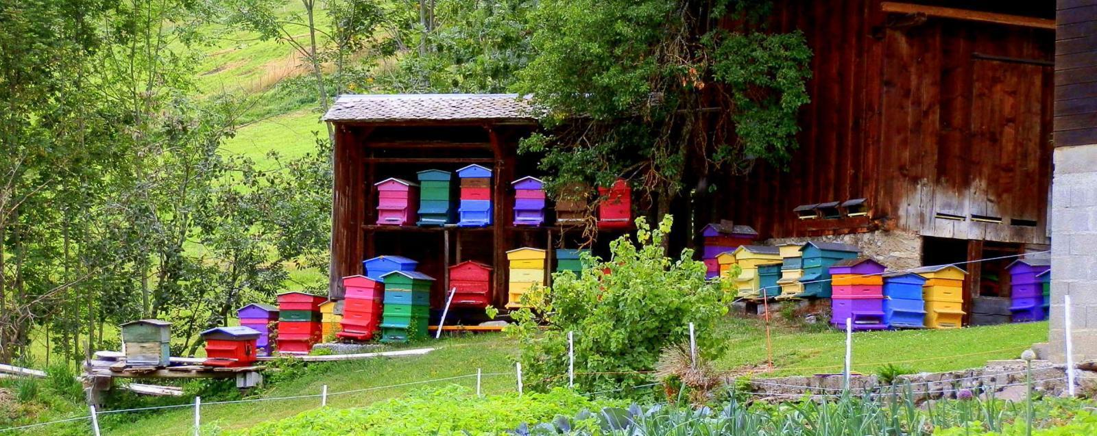 Les ruches au village du Mont