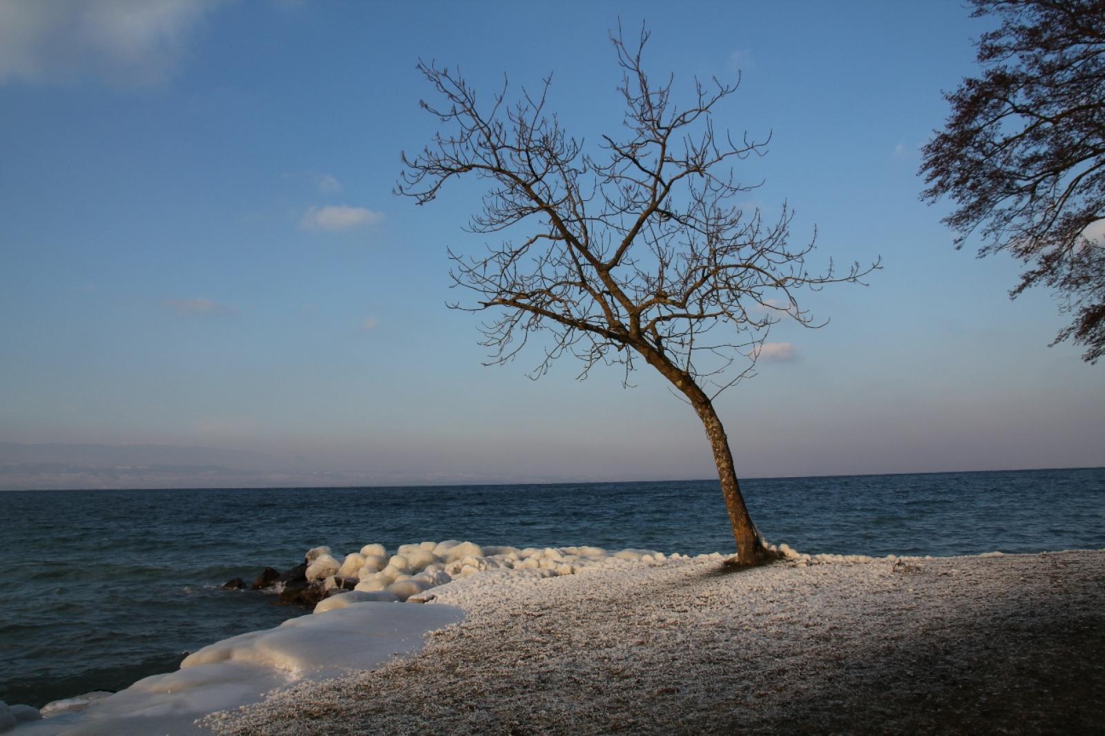 bise noire arbre 1