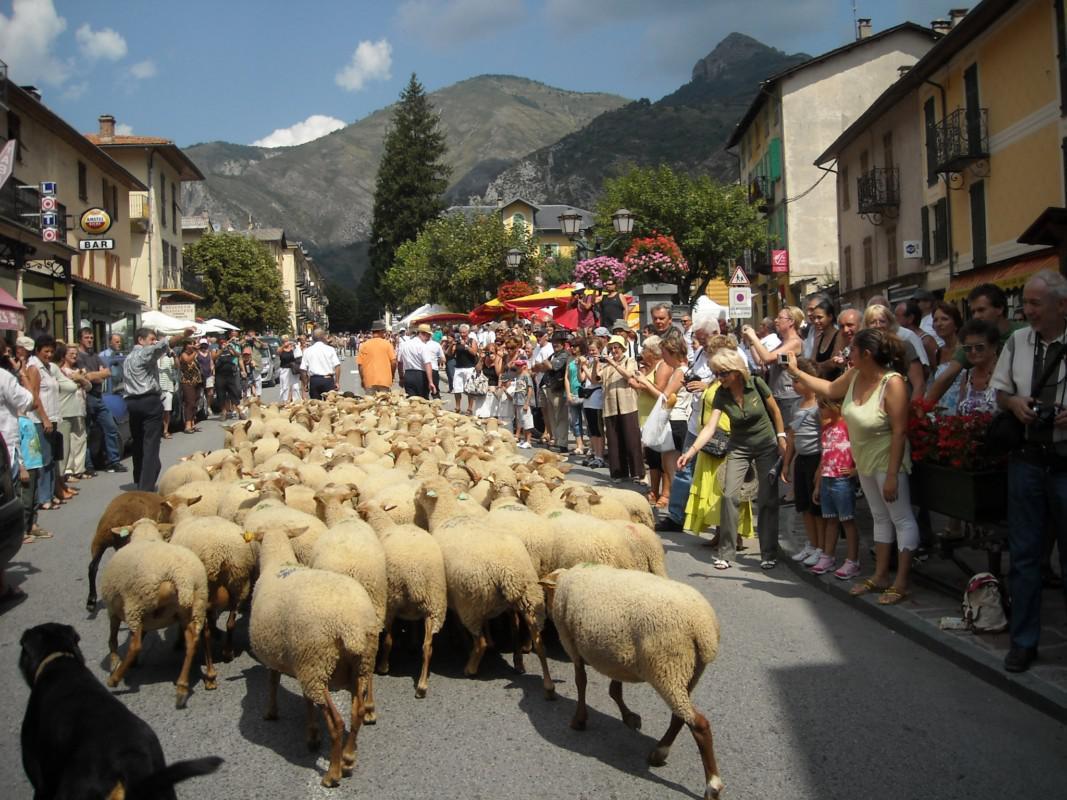 Défilé des moutons