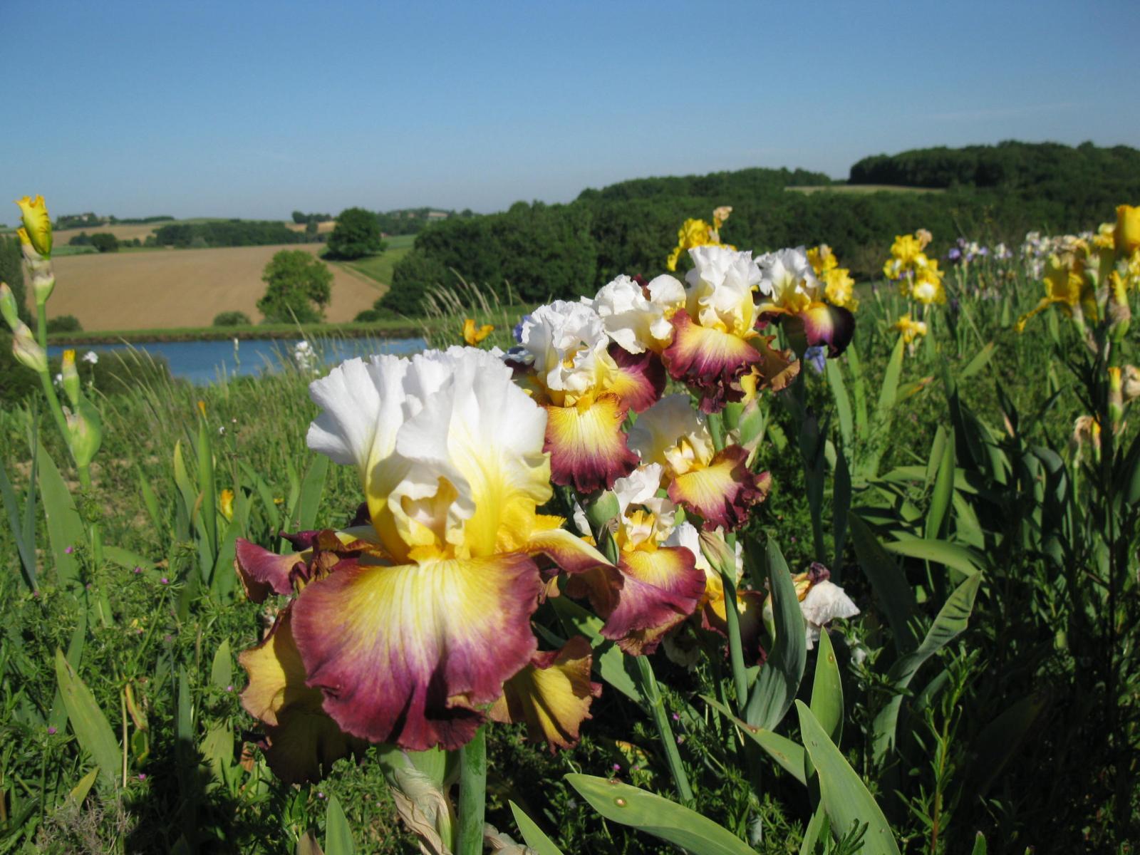 lac aux iris