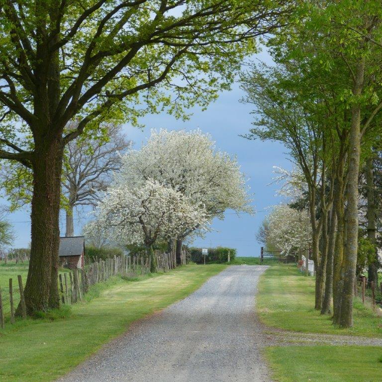 Avenue d'accès au chateau de La Montchevalleraie, Aviré, 4 km de Segré