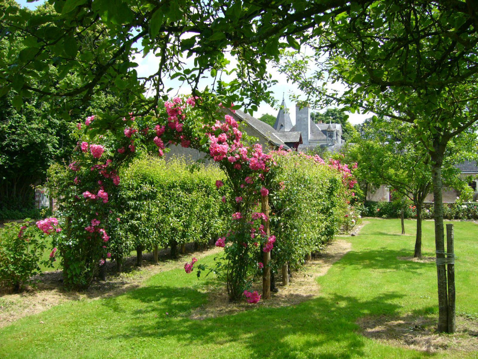 Roseraie du chateau de La Montchevalleraie, Aviré, 4 km de Segré