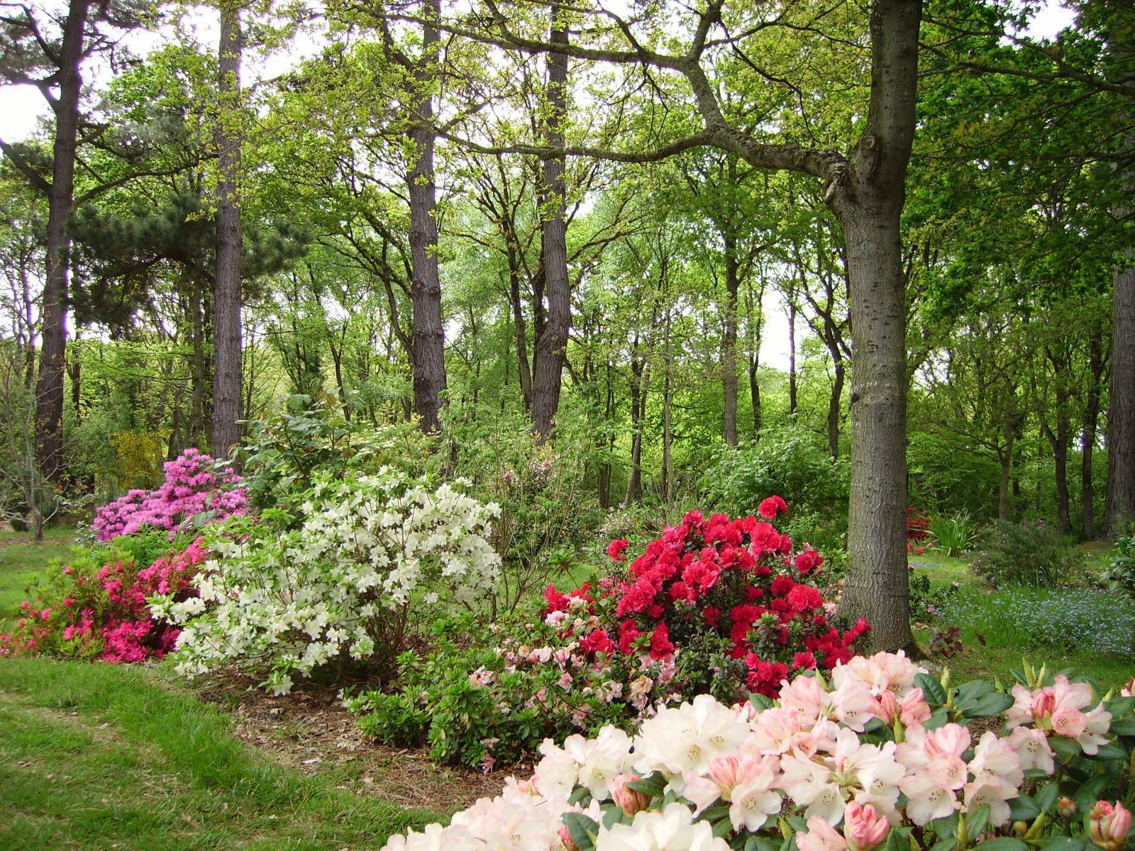 Image : Jardin sous Bois et Clairière