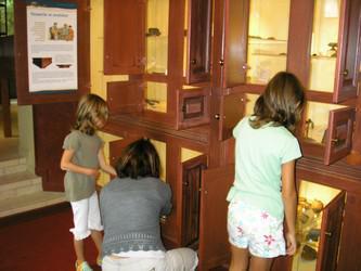 SAlle 4 - Exposition façon cabinet de curiosités