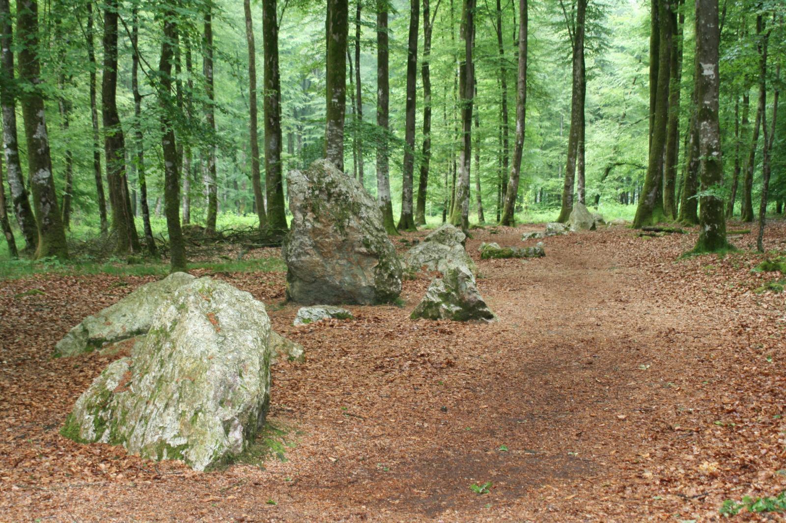 Image : Forêt de Fougeres