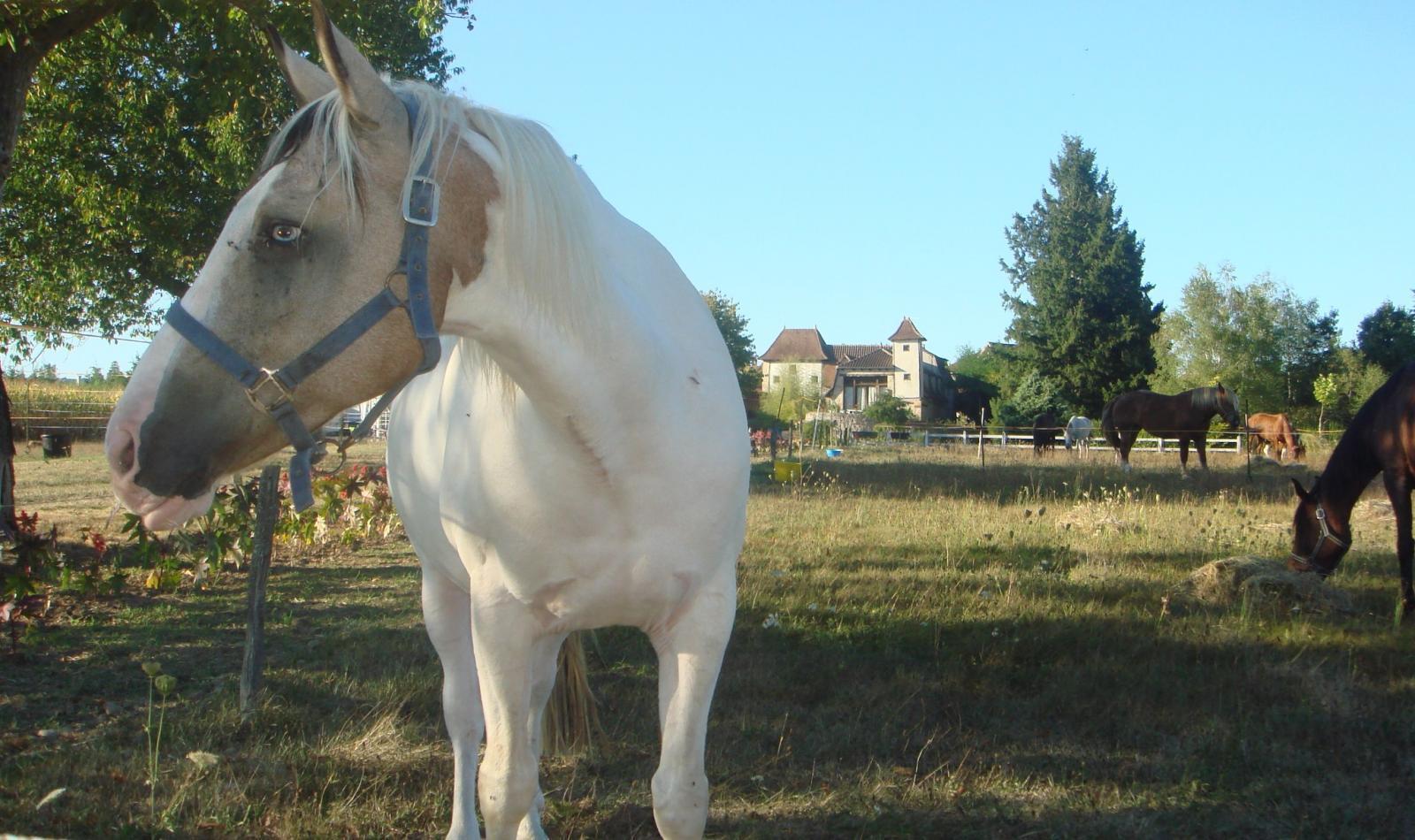 Au Domaine de Borie à Bretenoux (1)