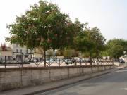 Segonzac bords de Charente.jpg